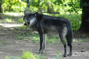 Wer hat Angst vor'm bösen Wolf - Zoom Erlebniswelt