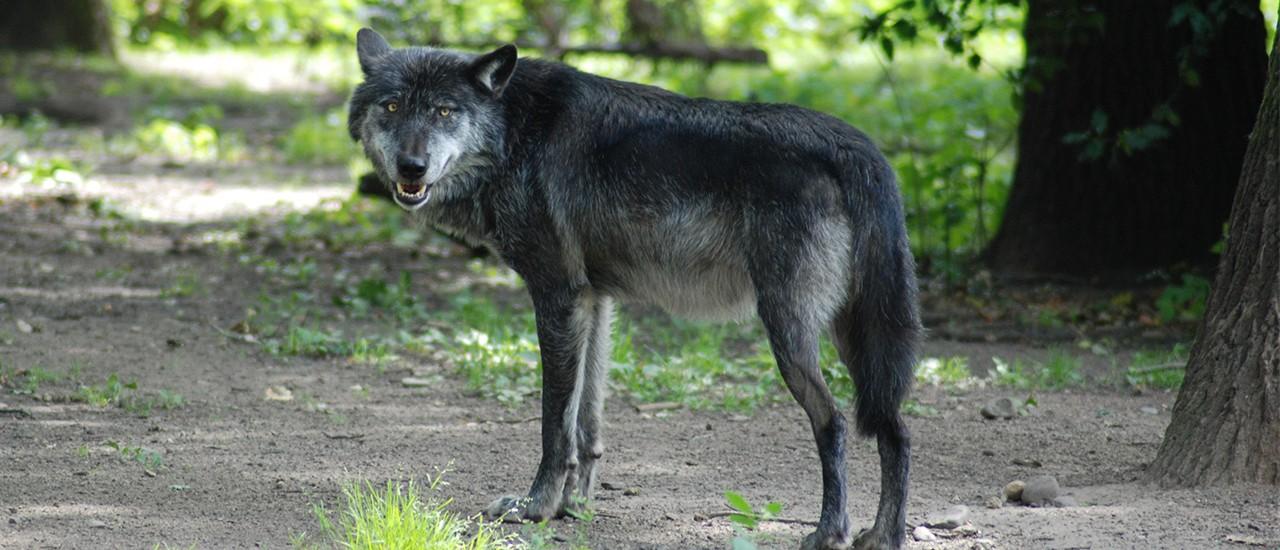 Wer hat Angst vor'm bösen Wolf – Zoom Erlebniswelt