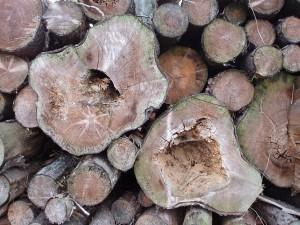 Holzstapel im Ratinger Forst
